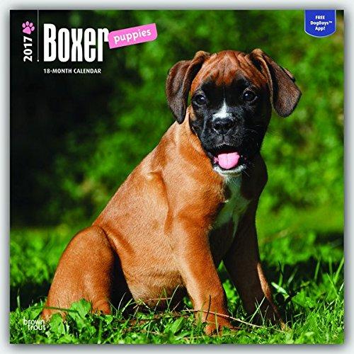 Boxer Puppies - Boxer Welpen 2017 - 18-Monatskalender mit freier DogDays-App: Original BrownTrout-Ka