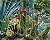 Nonebranded Juego de pintura al óleo por números para niños, plantas verdes, cactus, fotos, artes y manualidades para adultos, pintura al óleo por números, 40 x 50 cm