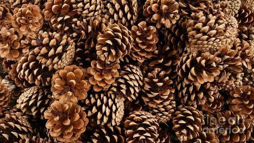 1 kg de piñas naturales de 3-5 cm de tamaño de calidad profesional, con una ligera fragancia a...