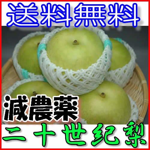 減農薬 長野産 二十世紀梨 約9キロ 24〜30個入 贈答用産地直送