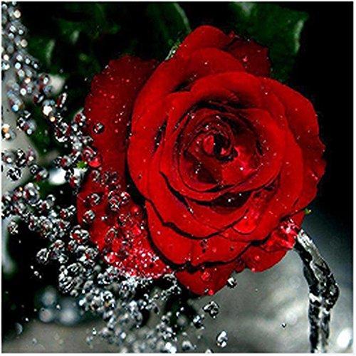 Riou DIY 5D Diamant Painting voll,Stickerei Malerei Diamant Rote Rose Blumen Bild Muster Crystal Strass Stickerei Bilder Kunst Handwerk für Home Wand Decor gemälde Kreuzstich (Mehrfarbig, 30 * 30cm)