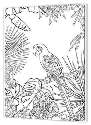 Pintcolor 7161.0 châssis avec Toile imprimée à colorier, Bois de Sapin/Coton, Blanc/Noir, 40 x 50 x 3,5 cm
