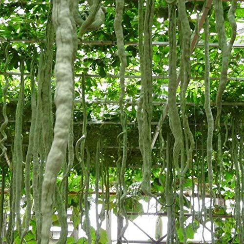 nulala 10 pcs Yard vert long graines de haricots, vert asiatique long haricot serpent graines de légumes haricots longs haricots plante