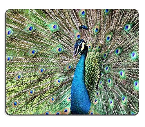 luxlady Naturkautschuk Gaming Mousepads zeigen seiner schönen Pfauenfeder Bild-ID 27654956