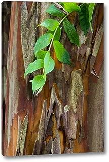 South Carolina, Charleston Crape Myrtle bark by Don Paulson - 13