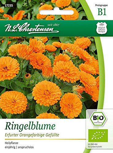 Bio Ringelblume 'Erfurter Orangfarbige Gefüllte' Saatgut Samen (Heilpflanze, einjährig)