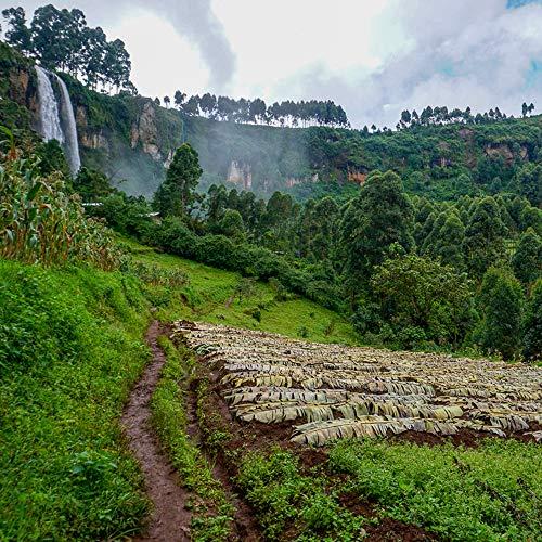 5 LB Unroasted Green Coffee Beans - Organic Uganda Sipi Falls Single Origin - High Altitude - Specialty Arabica of Bourbon, Blue Mountain Variety - Washed Process - Direct Trade - Fresh Crop