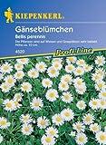 Sperli Blumensamen Wiesen-Gänseblümchen, grün