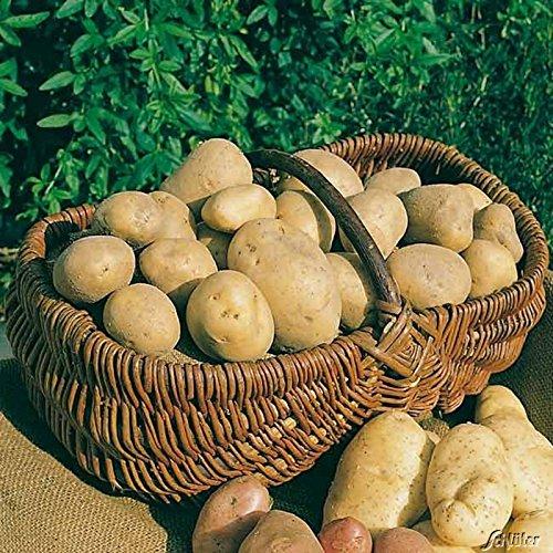 Pflanzkartoffeln, verpackt im Raschelsack, Typ: Princess, Inhalt: 2,5kg