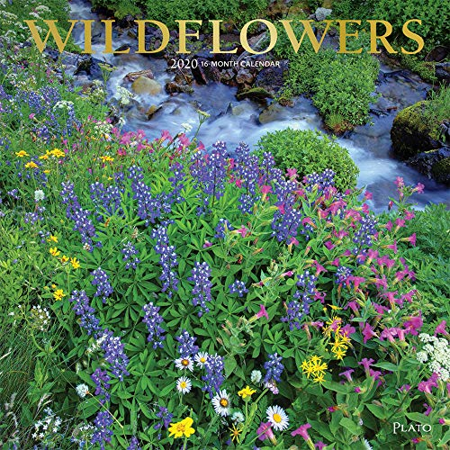 Wildflowers 2020 12 x 12 Inch Monthly Square Wall Calendar with Foil Stamped