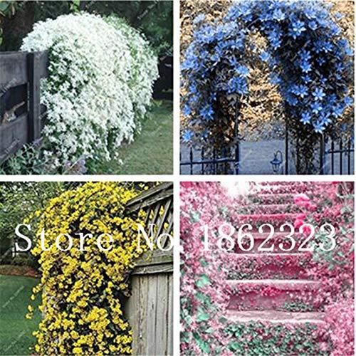 Bloom Green Co. 100 Pz rampicanti di gelsomino bonsai dei semi di fiore del gelsomino semina per la casa giardino di impianto Profumo arabo Gardenia fai da te Pianta in vaso: misti