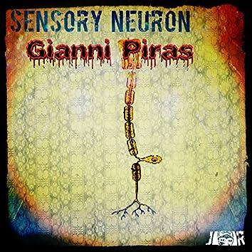 Sensory Neuron