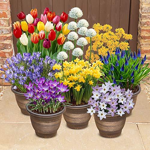 YouGarden Spring Mixture, 300 Bulbs