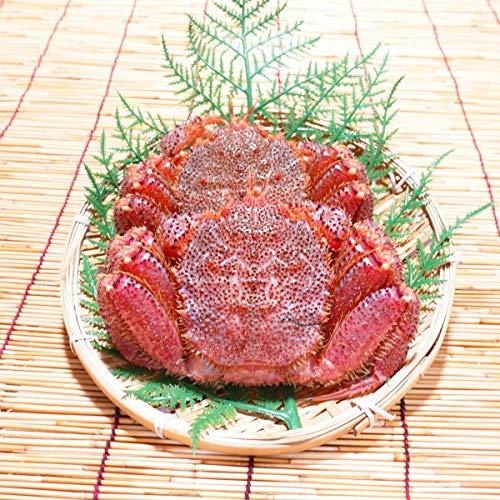 かにのマルマサ 北海道産 訳あり 活毛蟹 800g詰(2尾入)冷蔵品