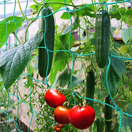 GardenGloss Premium Ranknetz mit großer Maschenweite für besonders ertragreiche Ernte von Gurken, Tomaten und Anderen Gemüsepflanzen - Rankhilfen für Kletterpflanzen (2m x 2.5m)