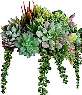MAXZONE 16 Pack Artificial Succulent Create Realistic Succulent Flocking Plants Unpotted Fake Succulents Plant for Lotus L...