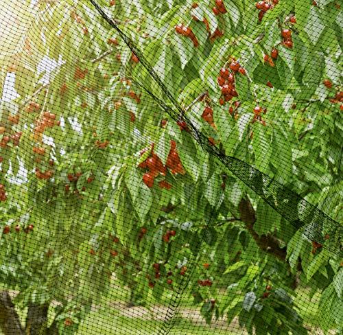 Windhager Vogelschutznetz Ortonet, 10 x 4m; schwarz; Schützt Obstbäume vor Vogelfraß - 2