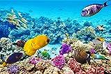 Fische Riff Unterwasser Meer XXL Wandbild Foto Poster P0150