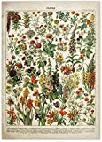 Cartel de flores vintage Impresiones de arte de lienzo floral antiguo Cartel educativo botánico Arte de pared de setas para decoración del hogar Cuadros de lienzo 40x60cm Sin marco