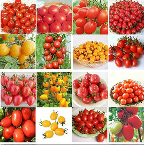 200pcs 24 GENRES Graines de tomate mélangé emballé Violet Noir Rouge Jaune Vert Cerise Pêche Poire Tomate graines aliments biologiques pour le jardin