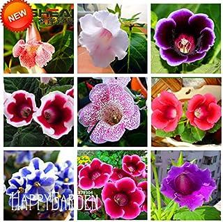 Professional Pack 50 Seeds//Pack Generic 2018 Hot Sale Purple Delphinium x Cultorum Tall Black Knight Flower Seeds Hardy Perennial Bonsai Seeds