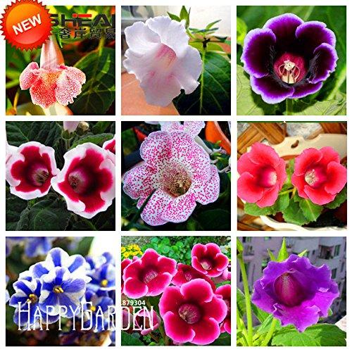 Gérmenes japoneses Iris japónica Flores de la orquídea blanca del iris japonés semillas flor rara fáciles de plantar. Inicio Jardín Bonsai 20PCS: Amazon.es: Jardín