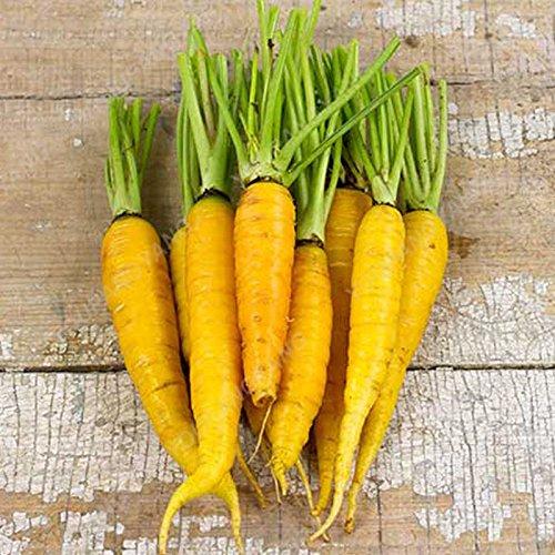 100/pcs super Grosses graines de carotte Bonsai géant carotte Semences potagères et les graines de fruits Graines bio Hygiène pour jardin Gris clair