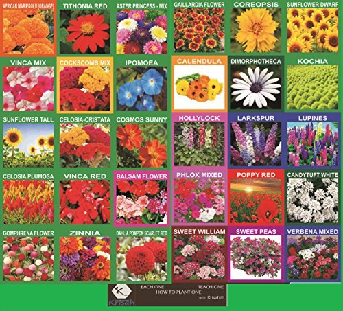Krisah (5220 +)30 Varieties of Flower Seeds with Instruction Booklet Outdoor Plant(30)