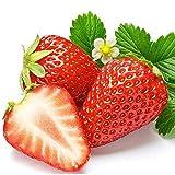 1pack 40 pz/borsa gigante fragola semi fragola frutta biologica semi di verdure