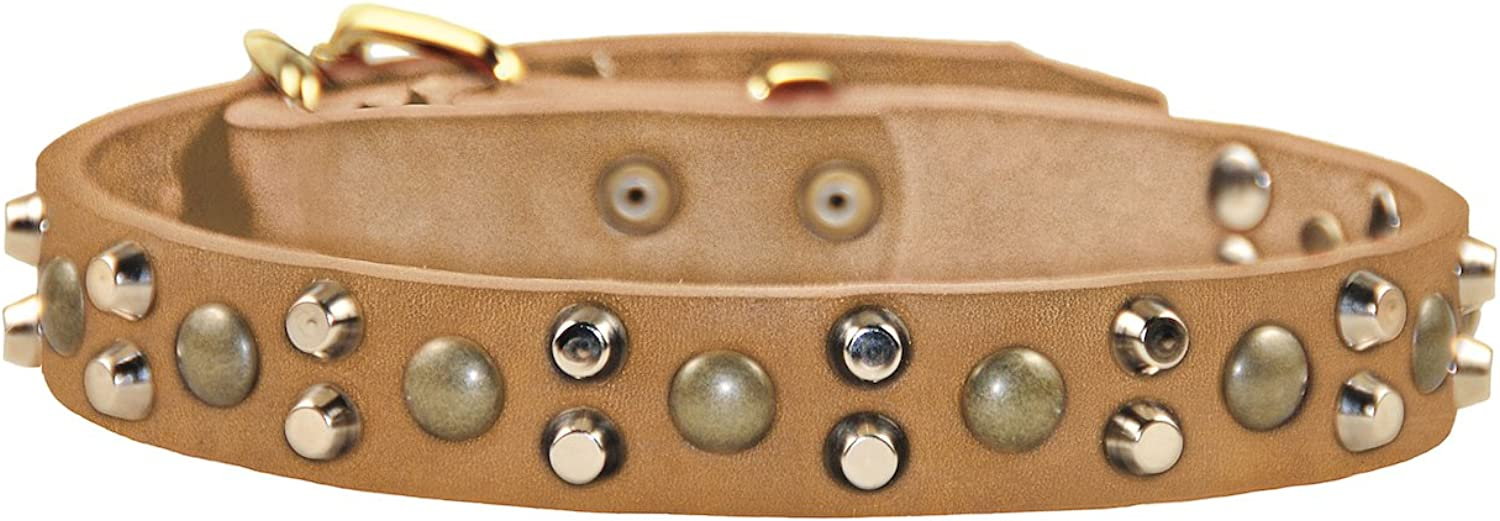 Dean and Tyler BUMPS & BITS Dog Collar With Solid Brass Hardware  Tan  Size 46cm by 3cm Width  Fits Neck Size 41cmes to 51cmes.