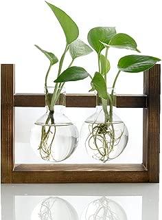 HaloVa Terrarium, Creative Fashion Plant Terrarium, Modern Decorative Glass Planter Hydroponics Terrarium with a Wooden Stand for Home Office and Centerpieces Decor, 2 Terrarium