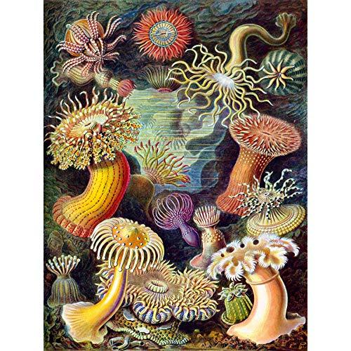 Bumblebeaver Nature Art Biology Anemone ERNS Haeckel Germany Vintage Poster Art Print 12x16 inch 30x40cm Natur Biologie Deutsche Jahrgang Kunstdruck