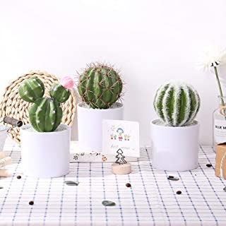 artificial cactus and succulents