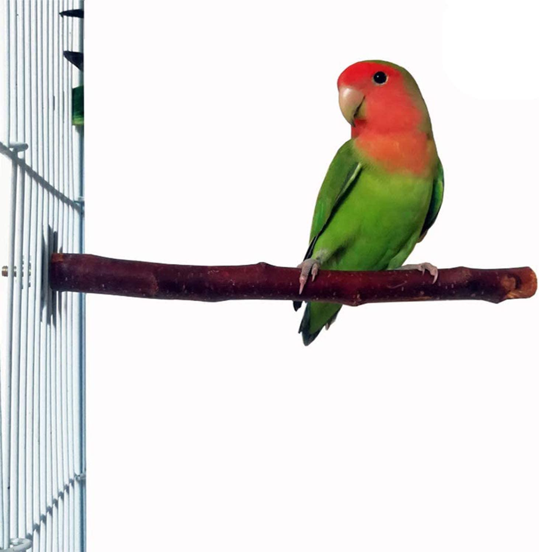 2021 new QBLEEV Parrot Bird Perches Nature Perch Apple Wood Cage Japan's largest assortment Pl
