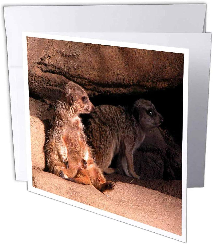 3dRosa gc_11525_2 Grußkarten Erdmännchen , 15 x 15 cm, cm, cm, 12 Stück B07BJD41DV | Praktisch Und Wirtschaftlich  7aca30