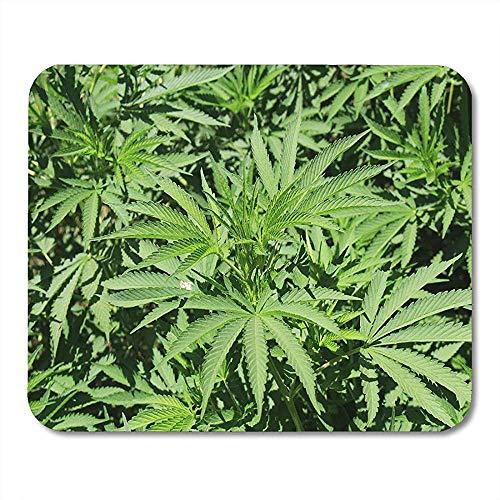 Mousepad Echte Marihuana-Pflanze Cannabis Marihuana Im Botanischen Garten Von Granada, Spanien Der Lateinische Name Lautet Sativa Native Mouse Pad 25X30Cm