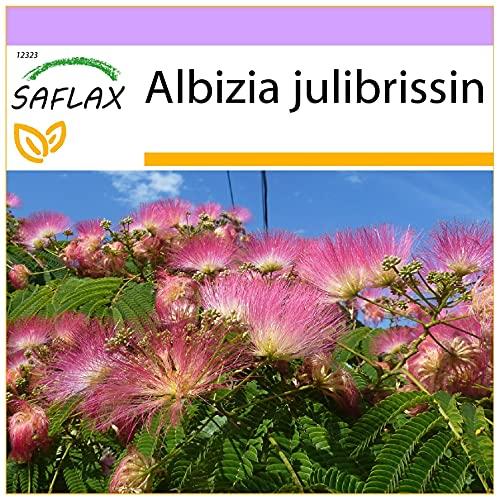 SAFLAX - Albizia - 50 graines - Albizia julibrissin