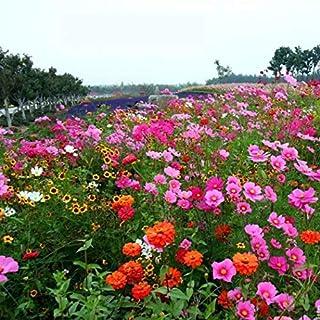 Semi di fiori selvatici rari Mix di fiori Butterfly /& Bee Friendly Mix Semi di prato Semi di perenne Hardy Kisshes Giardino