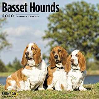 2020 Basset Hounds Wall Calendar by Bright Day, 16 Month 12 x 12 Inch, Cute Dogs Puppy Animals Hunting Canine