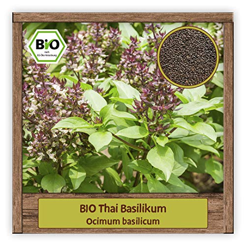 BIO Thai Basilikum Samen Strauchbasilikum (Ocimum basilicum) Thaibasilikum Kräutersamen