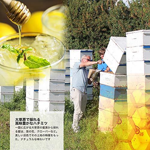 [熊手のはちみつ] カナダ産純粋 はちみつ (ポリ 500g) 100%純粋 ハチミツ 蜂蜜 (2本SET)