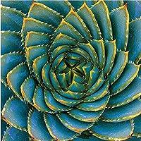 クロスステッチカウントキット印刷キット家の装飾クロスステッチパターン鉢植え舗装石ジューシーな11CT40x50プレプリント生地刺繡工芸針と糸キット印刷キット