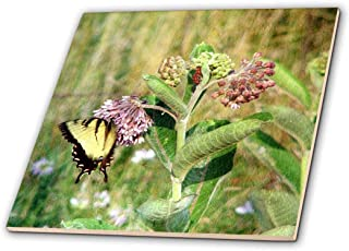 3dRose ct_192933_4 Butterfly and Milkweed by Angelandspot-Ceramic Tile, 12-Inch