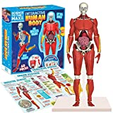 """Be Amazing! Toys Interactive Human Body Fully Poseable Anatomy Figure – 14"""" Tall Human Body Model for Kids - Anatomy Kit – Removable Muscles, Organs and Bones STEM Kids Anatomy Toy – Ages 8+"""