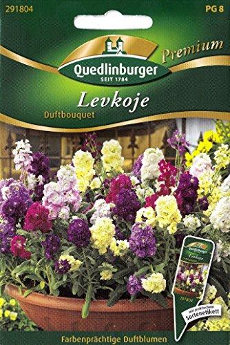Levkoje, Duftbouquet, Matthiola incana, ca. 60 Samen