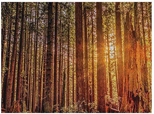 Estados Unidos   Puzzle de Madera de 1000 Piezas, árboles Altos, bosques Rojos, Bosque Humboldt, Imagen de secuoya de California, Naranja, marrón Oscuro, Verde