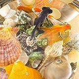 Jangostor 100PCS Muscheln Gemischt Ozean Strand Muscheln Seestern Perfekt für Vase Füllstoffe,Strand Thema Party Hochzeit Dekor,DIY Kunsthandwerk,Fisch Panzer,Kerze Herstellung - 2