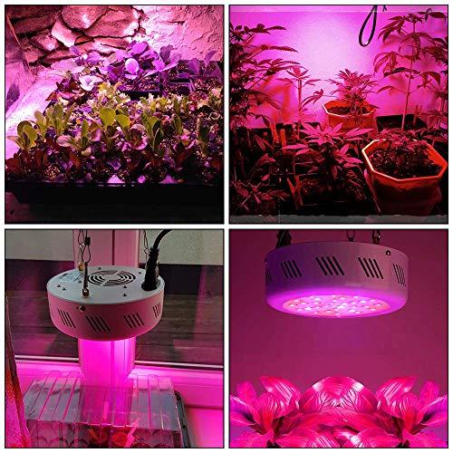 Roleadro 300w UFO Grow Led Horticole Floraison Lampe pour Plante Culture Croissance dans Serre avec Lumière UV IR et Blanche 10000K