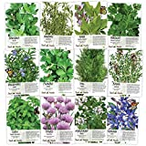 Non-GMO Culinary Herb Seed Collection, 12 Individual Seed Packets...