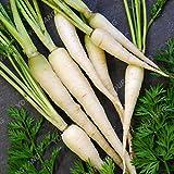 200pcs super géant carotte Semences potagères Heirloom russe Graines bio pour jardin Plantes douces et en bonne santé Graines de fruits kaki foncé